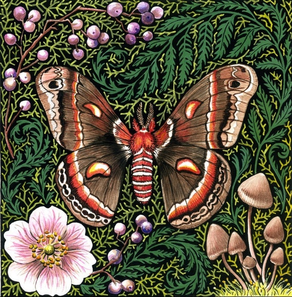 Cecropia Moth woodland natural history forest moss original gardening art reproduction colorful home decor botanical print