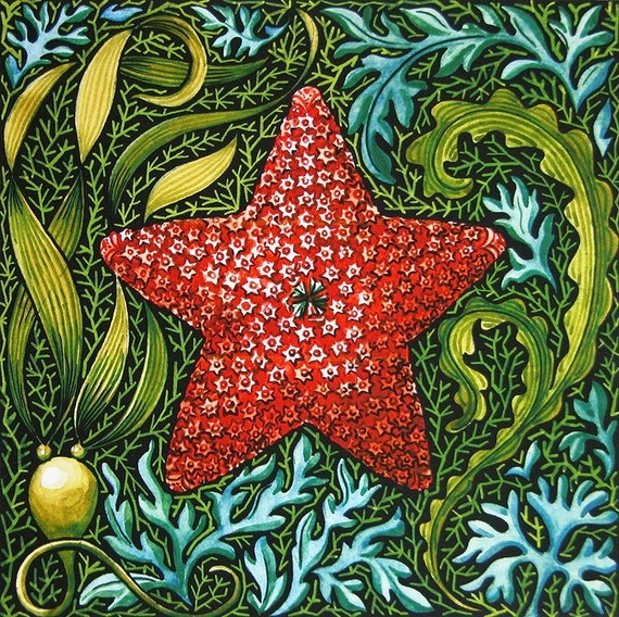 Holiday Sea Star nautical natural history original art botanical reproduction watercolor colorful digital print