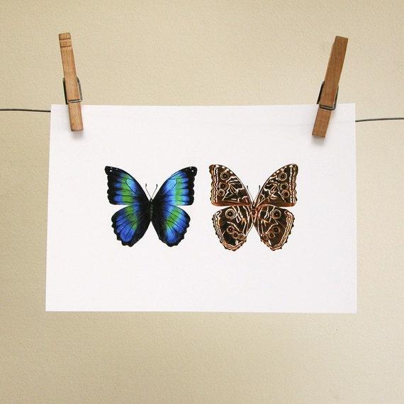 ultimate morpho butterfly reproduction art print natural history gift for gardener