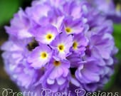 Pretty as a Primula Blank Photographic Greeting Card