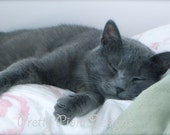 Cat Nap Blank Photographic Greeting Card