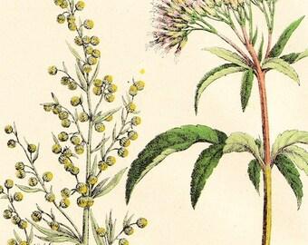 Antique Botanical Print . plantae plate XLII original chromolithograph dated 1890 . vintage old art