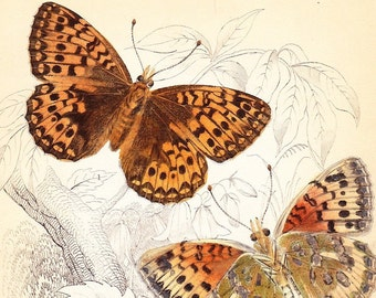 Antique Butterfly Print Dark green fritillary, pearl bordered fritillary . vintage engraving plate 15 . british butterflies art dated 1835