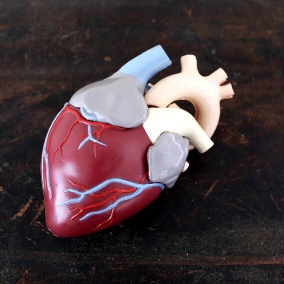 Vintage Medical Model - Heart