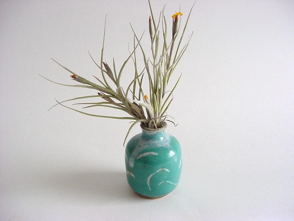 Mini vase with air plant handmade pottery p6 for Air vase