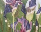 Purple irises and wild onions