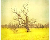 This Tree Stands - Fine Art Photograph 8x8