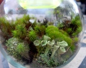 Large LIVE Moss and lichen Terrarium kit - Build your own-Make 1 or More