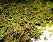 Sphagnum Moss for Terrariums-Dried Moss-Preserved Moss-2 Oz Bag Shredded Green Mountain