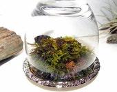Sale-Woodland Forest Upside Down Miniature Moss Rock Cloche Terrarium