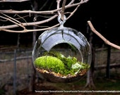 Hanging Glass Globe DIY Moss Terrarium Kit-Live Assorted Moss Lichens & Glass ball included-Wedding Decor