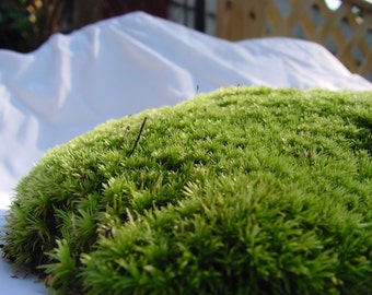 LIVE Pillow moss-1 Large Piece