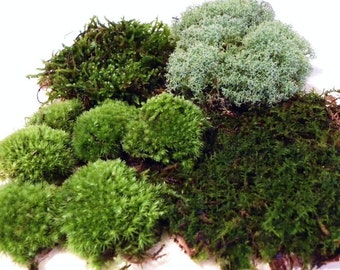 Live Terrarium Moss-Quart Bag of 4 moss varieties-Pillow moss-reindeer moss-fern moss-feather moss-Terrarium supplies