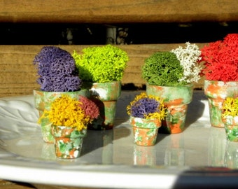 3 Miniature Flower pots filled with Lichens-Set of 3 pots 1 large and 2 small