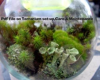 Moss Handbook a 17 Page Terrarium Handbook-How to build and Care for a Terrarium