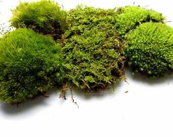 Live Moss ,fern moss,sheet moss,pillow moss,roughstalk moss,reindeer moss-Quart Bag of 3 moss varieties and 5 sections-Organic moss
