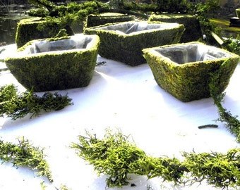 Square Moss Baskets for weddings-Bonsai-Orchid Baskets-Soft green preserved moss
