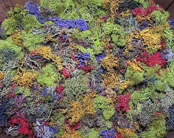 Lichen Confetti-Preserved Reindeer moss in over 8 colors-1 oz bag full