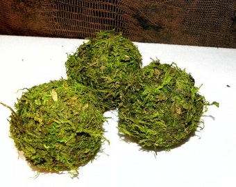 """One 2 """" Moss Ball- Beautiful Hand made ball of Preserved Moss-Wedding favors-Fairy party"""