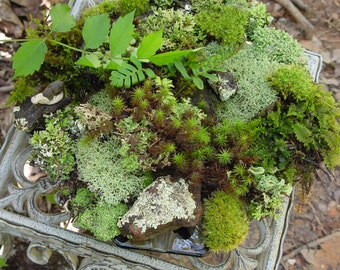Moss of the Month Club-12 months of moss lichens and more -Wedding Gift-Birthday Gift