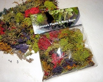 Lichen Confetti-Reindeer moss-1 oz bag Preserved  in MANY colors