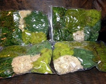 Fern Moss-Reindeer Moss-Mood Moss- Preserved Moss for terrariums with no Fuss-One Gallon Bag full