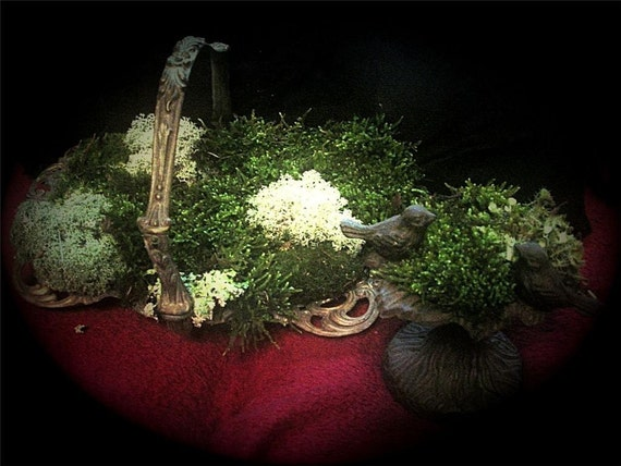 Assorted Live Moss -Enough to make 10 small terrariums-2 bags full
