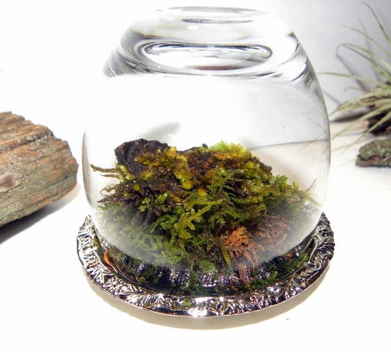 Sale-Woodland Forest Upside Down Miniature Moss Rock Cloche Terrarium