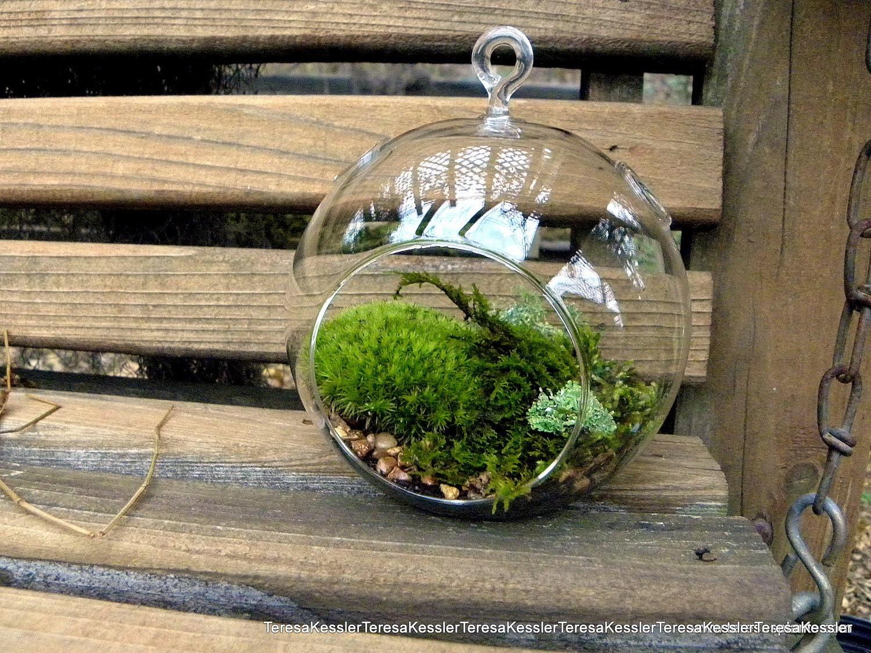 hanging glass globe diy moss terrarium kit live assorted moss. Black Bedroom Furniture Sets. Home Design Ideas