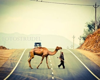 India Photograph. Camel Crossing in Rajasthan, India 8x12