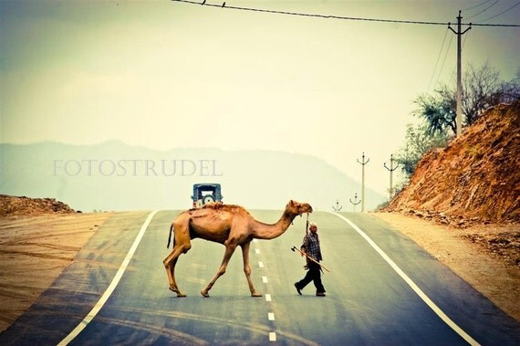 Camel Crossing in Rajasthan, India. Mounted on Wood.