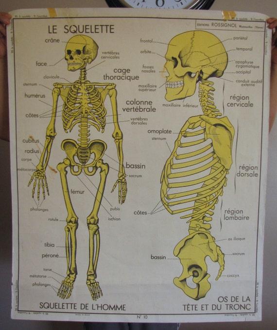 huge 1950 39 s french school poster skeleton le squelette. Black Bedroom Furniture Sets. Home Design Ideas
