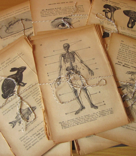 ANTIQUE French Textbook Illustrated Pages Lot of 10 Pages 1911 Natural History, Anatomy, Botanical etc