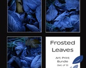 Frosted Leaves Print Bundle - 3 Fine Art Photogrophic prints - each one 6 x 6 (15cm x 15cm)
