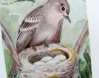 Amazing 1906 Original  Artist Chester Reed Bird Graphics Lot