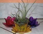 Mini Air Plant Arrangement, Yellow, Purple or Fuscia Glass Tullip Vase