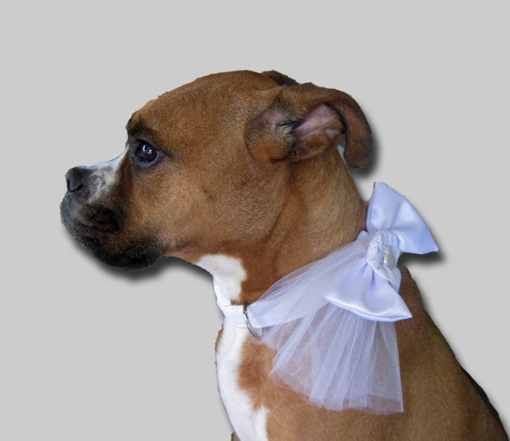 White Dog Collar and Bow Wedding