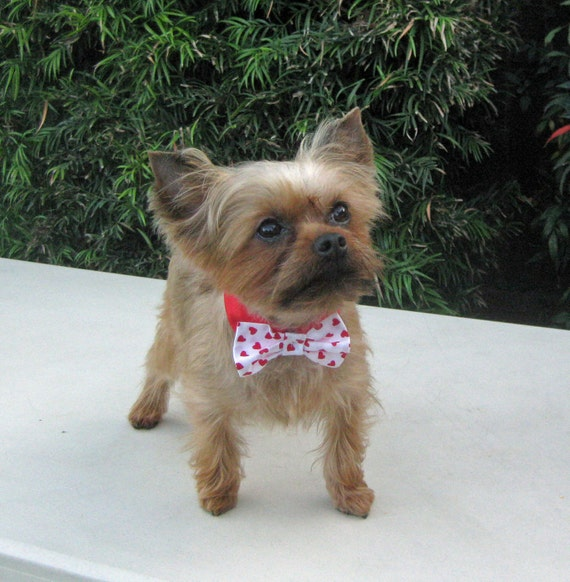 Dog Bow tie Collar Valentine's Day Red Hearts