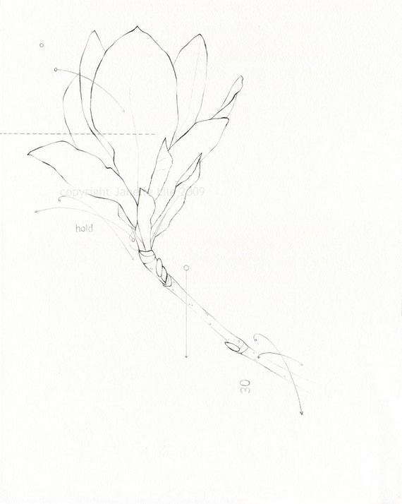 Magnolia Flower Line Drawing : Items similar to pencil line drawing of magnolia flower