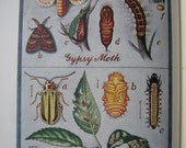 vintage 1st edition 1946 gardener's bug book