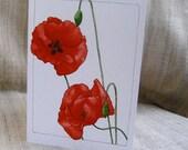 Poppy blank greeting card