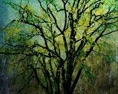 Enchanted Forest - 8X12Fine Art Print