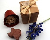Texas Party Favors - Grow a Texas Bluebonnet Garden - State of Texas Themed Events Gifts