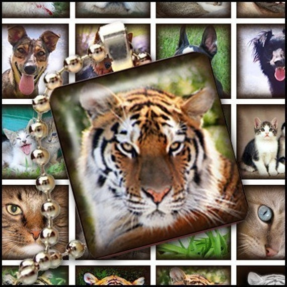 Cats Dogs and exotic animals - Digital Collage Sheet - 1x1 inch squares Great for Scrabble Tile Pendants - Buy 2 Get One FREE
