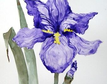 Single Iris - Original Watercolor