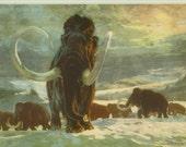 Vintage 1963 Prehistoric Animal Print - Mammoth