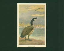 Canada- Goose 50's Vintage-style Travel Decal/sticker
