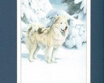 1919 North Greenland Eskimo Dog Vintage Print