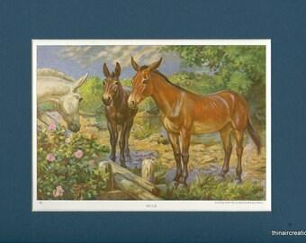 1923 Vintage Mule Farm Work Animal Print
