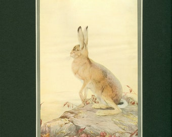 Antique circa 1909 Aesop's Fable Print of The Hare and Tortoise